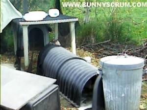 BUNNY PLASTIC TUNNEL & VERANDAH~1