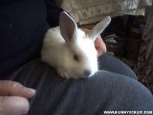 IMG_20141028_Young Bunny on Knee-1~1