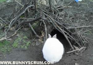 SA40007_Rabbit burrow_crop2~1