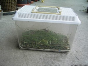 SA400231_GRASSHOPPER BOX_smaller-W