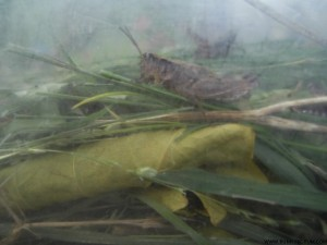 SA400236_GRASSHOPPER IN BOX-closeup-SMALLER-W