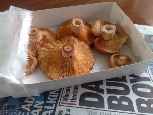 Fairfield Farmers Market- Pine mushrooms